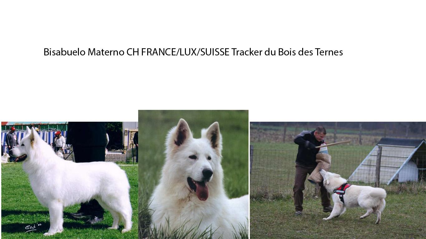 Tracker du Bois des Ternes